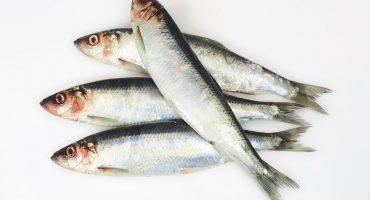 North Sea herring fishery