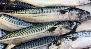 Scottish mackerel catchers and processors call for swift international agreement to ensure sustainability of the stock