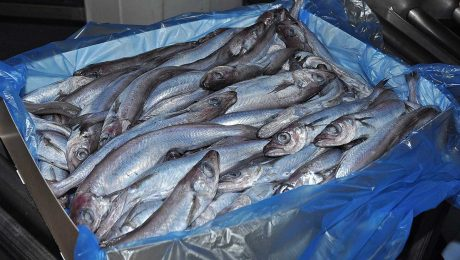 Scottish fleet successfully completes annual blue whiting fishery