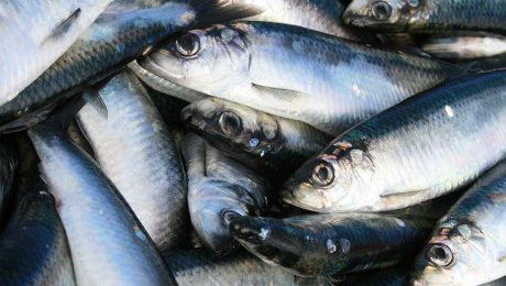 A diet with more fish fats can reduce migraine headaches